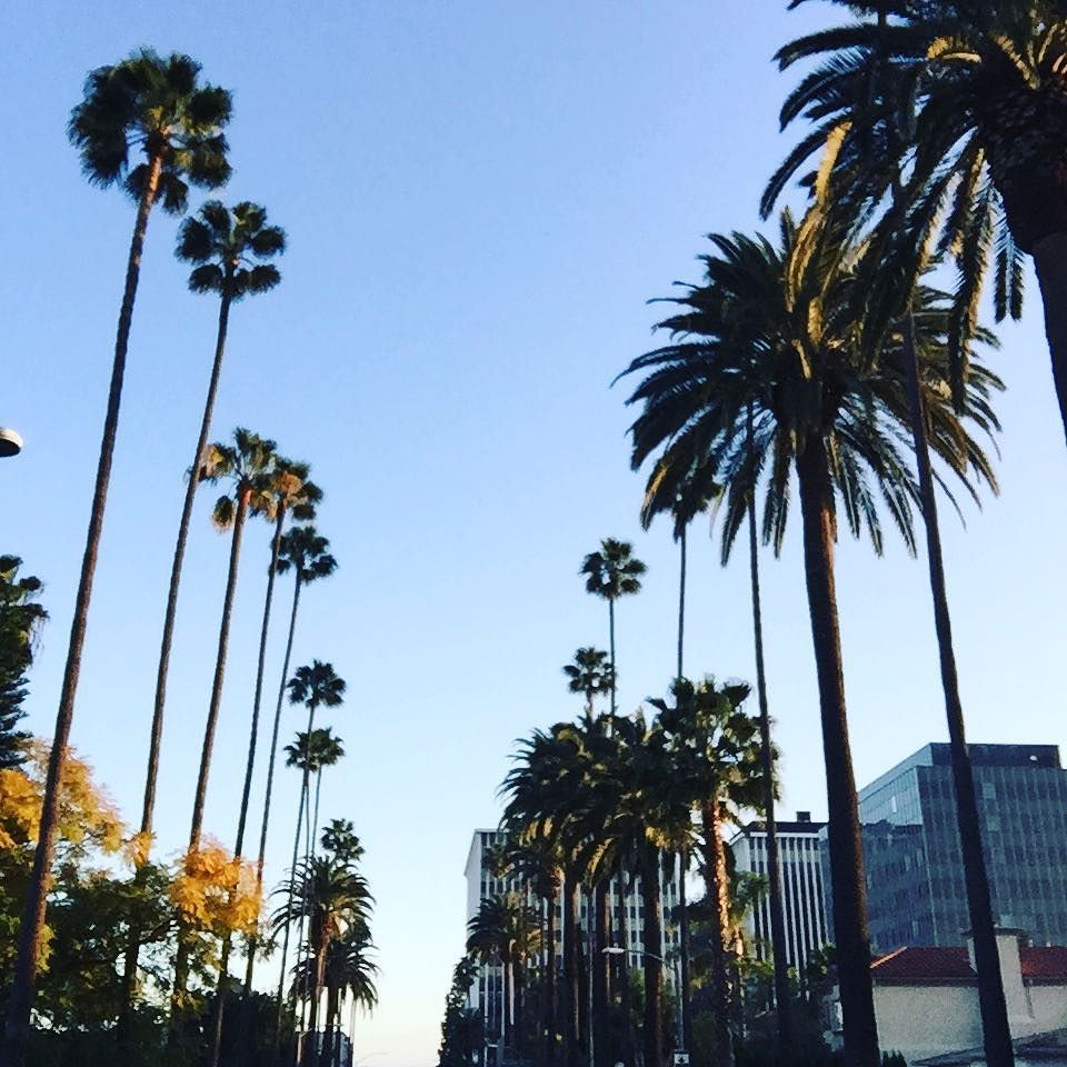 #BeverlyHills #California  One of those beautiful BH  days - picture perfect!  #sunshine #palmtrees #cali #socal #travel #travelpic #la #LosAngeles #sunnyday #sunny #weather #californiadreaming #californiadreamin #ilovela #moments #visualsoflife #thehappynow #nothingisordinary #ilovemylife #90210 #hunterphoenix