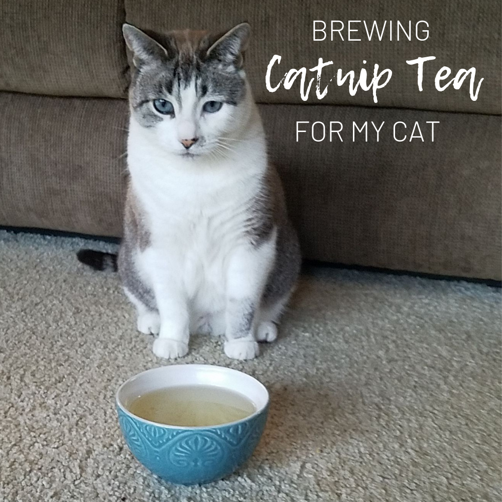 I decided to write a small post about giving my cat some