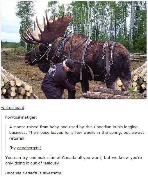 on Canada Even the moose are loyal in Canada, unlike most people in America<< Woud you like some aloe vera for that BURN?Even the moose are loyal in Canada, unlike most people in America<< Woud you like some aloe vera for that BURN?