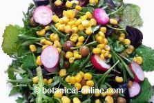 Photo of Recetas fáciles para la fibromialgia – Botanical-online