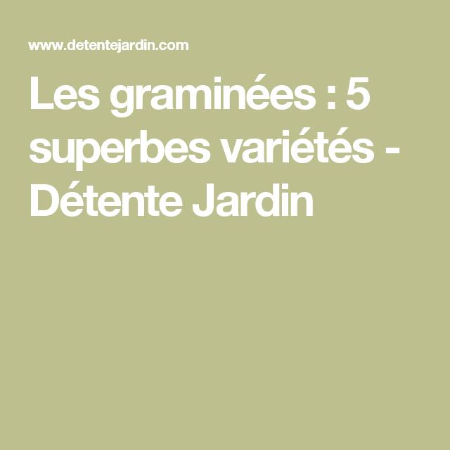 Les graminées : 5 superbes variétés - Détente Jardin