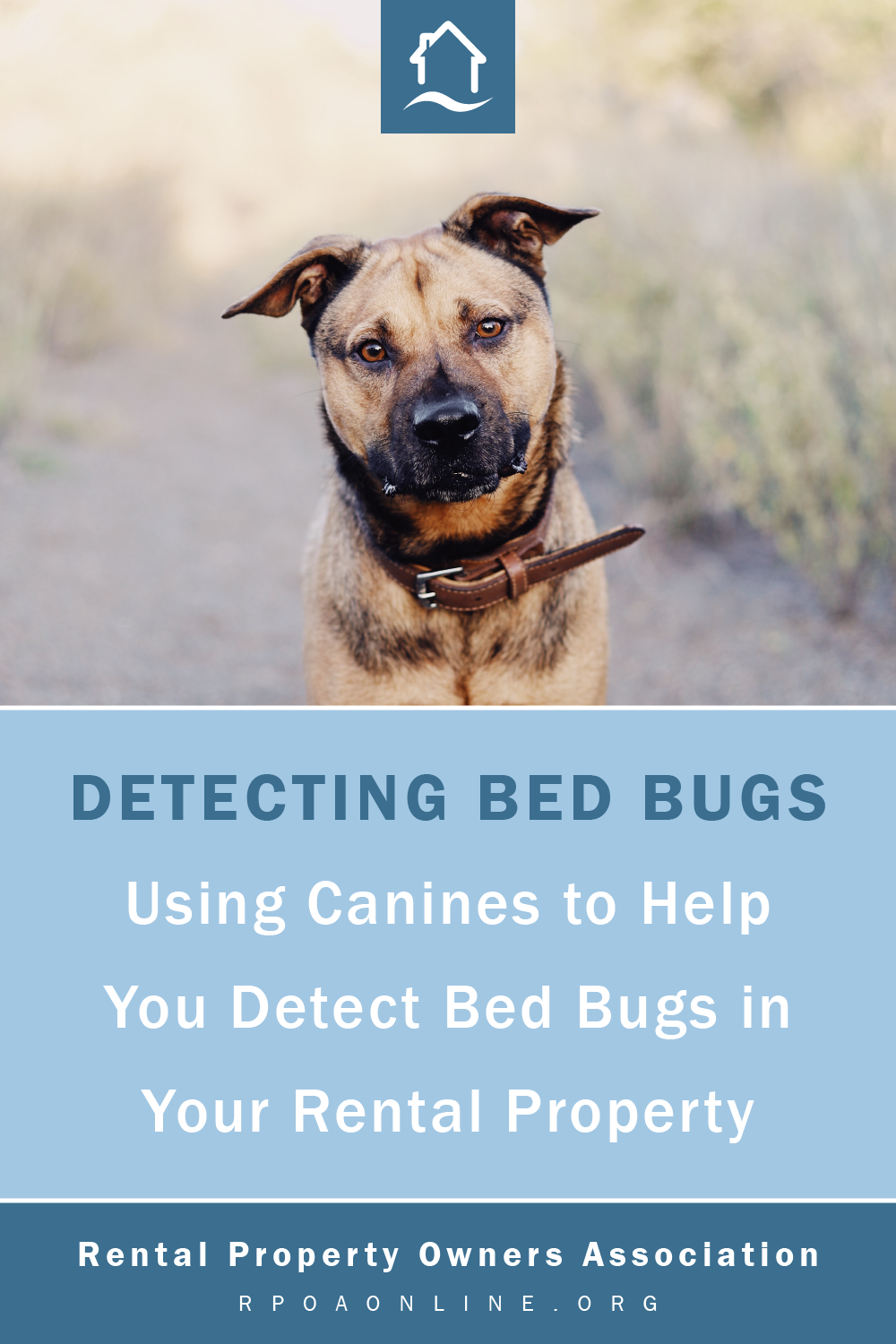 Use Of Canine Detection For Bed Bugs Bed Bugs