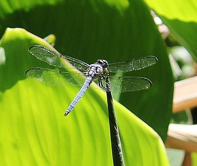 All sizes | Dragonfly 2 | Flickr - Photo Sharing!