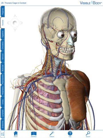 For Students 12 Visible Body 3d Human Anatomy Atlas Apps For
