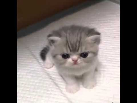 Acayip tatlı kedi 2015