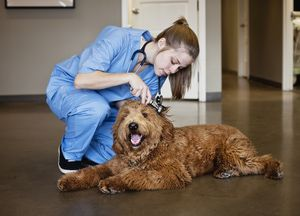 The Best Scholarships To Lower The Cost Of A Veterinary Education Becoming A Veterinarian Scholarships Veterinary