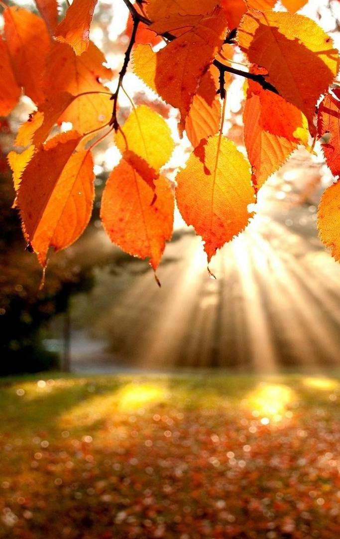Autumn Light Fall Desktop Wallpaper iPhone
