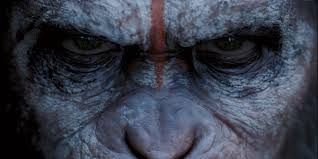 Dawn Of The Planet Of The Apes - 15th July 2014
