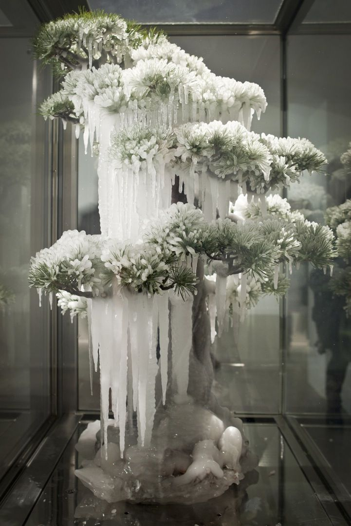 Frozen Suspended Bonsai Tree Sculptures Tree sculpture and Bonsai