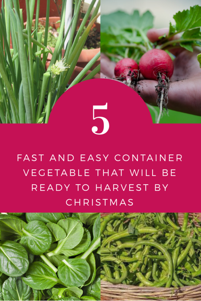 5 Vegetables That Grow Fast And Easy Indoors With Images Vegetables Growing Vegetables Indoors Container Vegetables