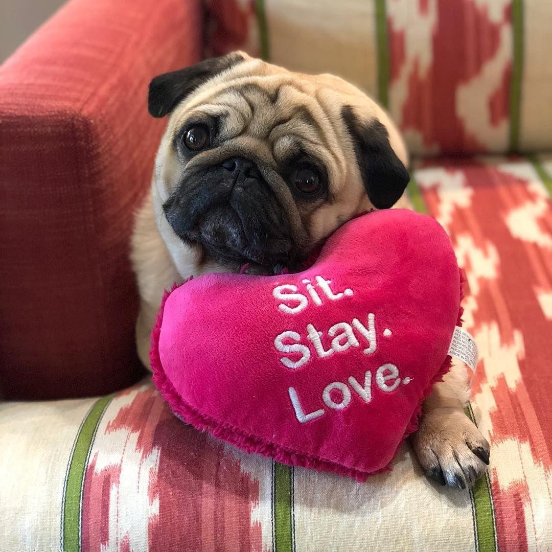Sit Stay Love A Pug Matildazpug Pug Pugs Pugs Funny