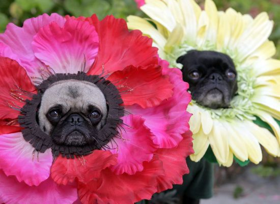 PHOTOS: The Funniest Pet Halloween Costumes Ever