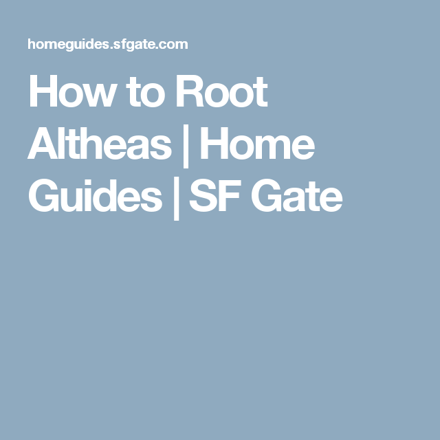 How to Root Altheas | Home Guides | SF Gate