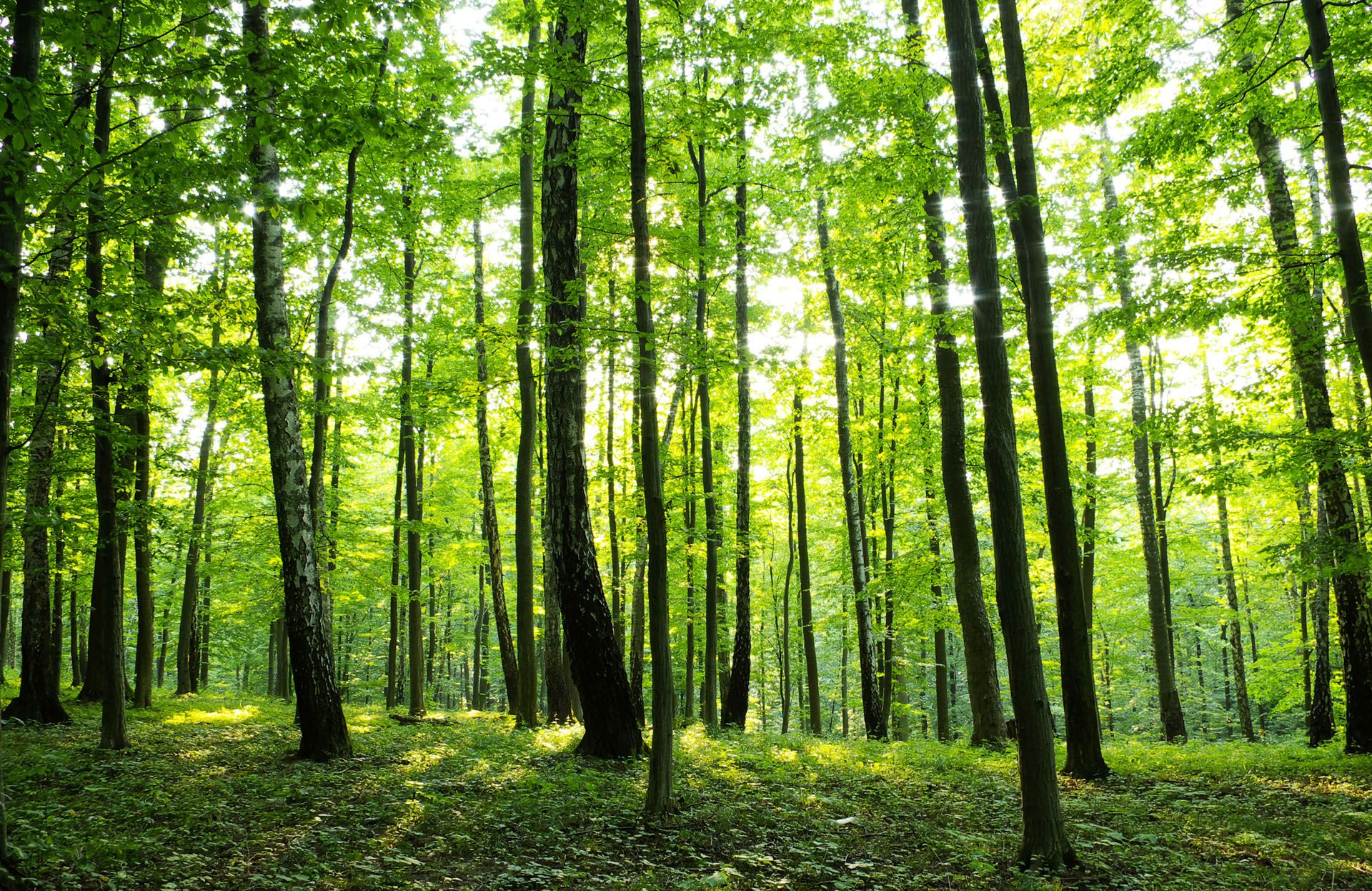 Fototapete Wald Zu Vlies Fototapete Fototapeten Tapete Tapeten Foto Wandbild Wald Fototapete Fototapete Wald Wald Tapete