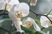 Tipps und Tricks rund um die Orchideen-Pflege - #die #OrchideenPflege #rund #Tip... - #die #Orchideenpflege #rund #Tip #Tipps #Tricks #um #und #orchideenpflege Tipps und Tricks rund um die Orchideen-Pflege - #die #OrchideenPflege #rund #Tip... - #die #Orchideenpflege #rund #Tip #Tipps #Tricks #um #und #orchideenpflege