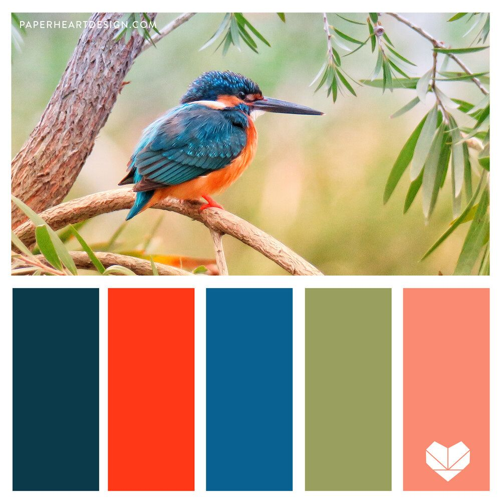 Pantone Color of the Year 2020: Classic Blue Color Palettes, Kingfisher Bird