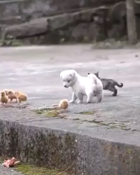 Very cute puppy #cutepuppies