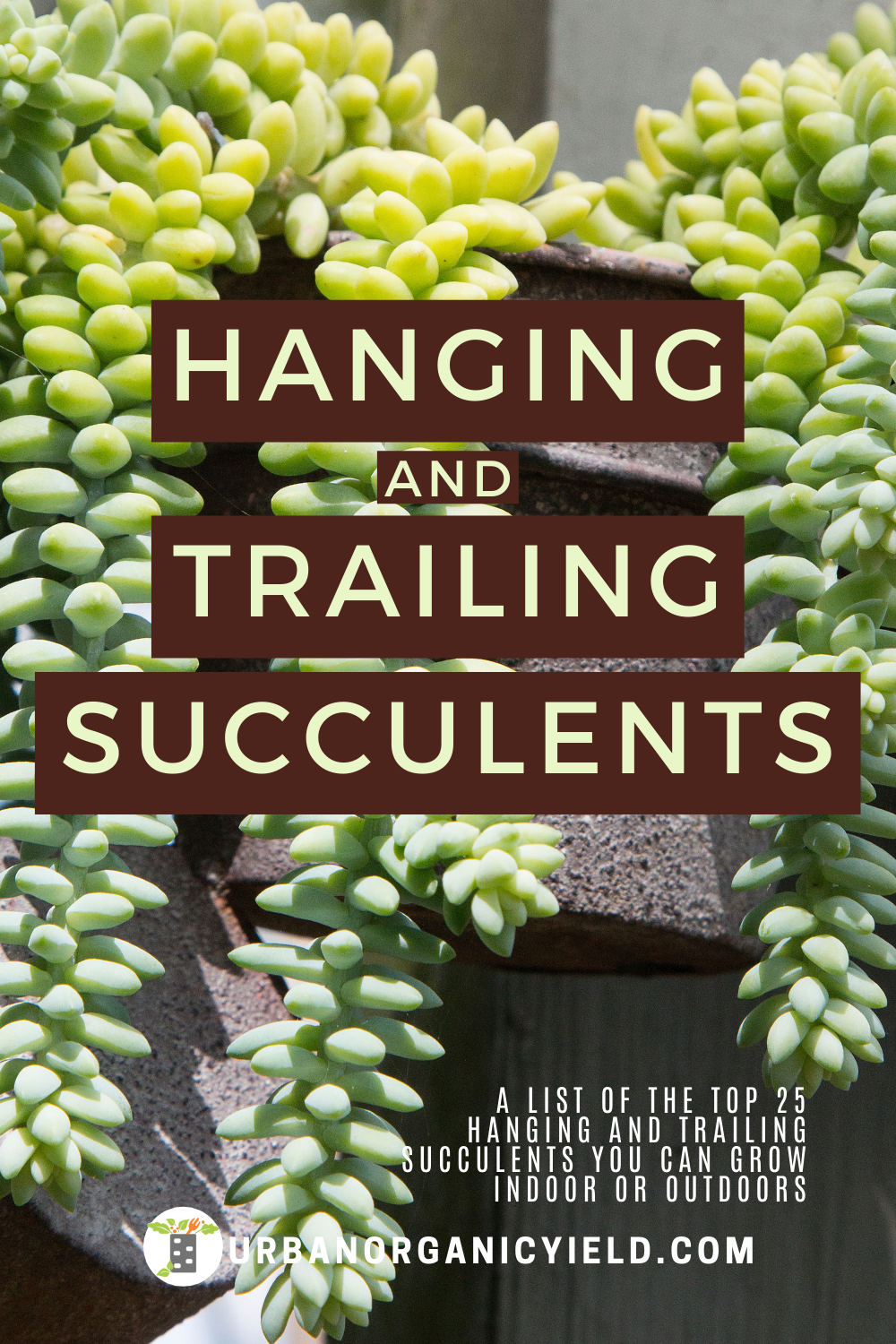 Pin on Succulent & Air Plant Gardening