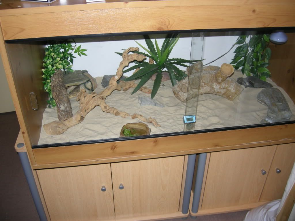 Bearded dragon tank reptile forums bearded dragon cage