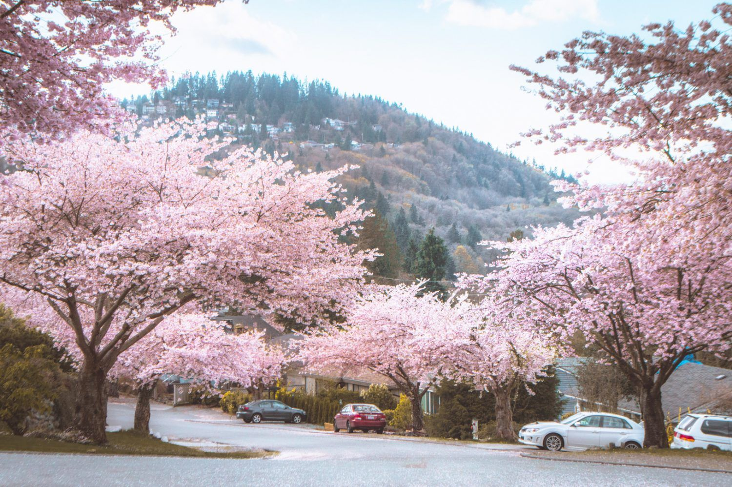 The Best Spots To Photograph Vancouver S Ridiculously Good Looking Cherry Blossoms Vancouver Guide Canada Travel Vancouver