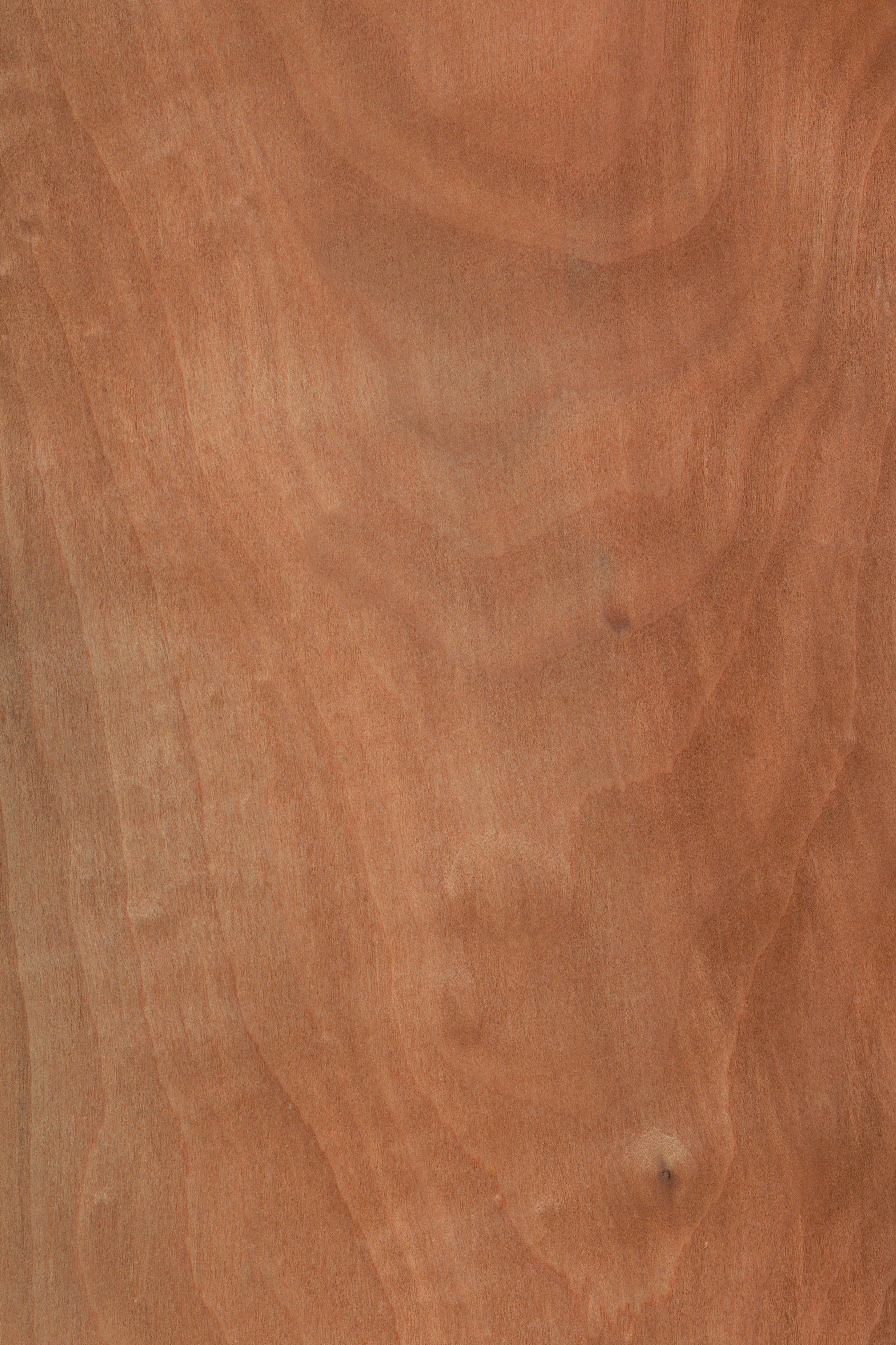 Apfelbaum | Furnier: Holzart, Apfel, Blatt, hell, braun ...