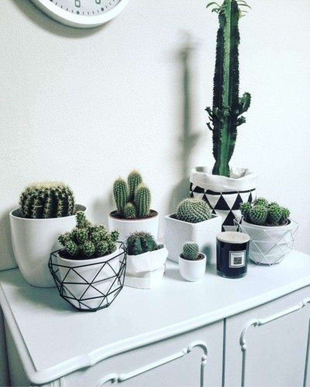 Creative And Beautiful Cactus Room Decor Decomagz Plant Decor Plants Cactus Decor