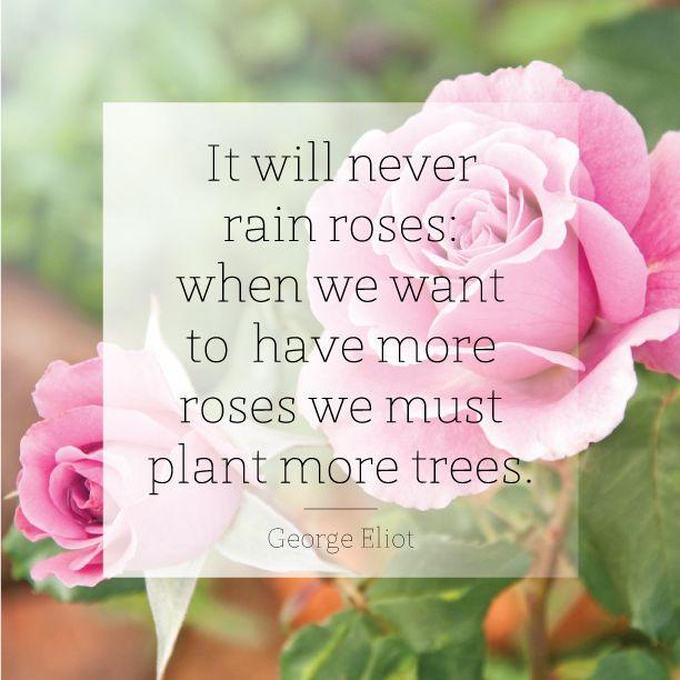 it will never rain roses