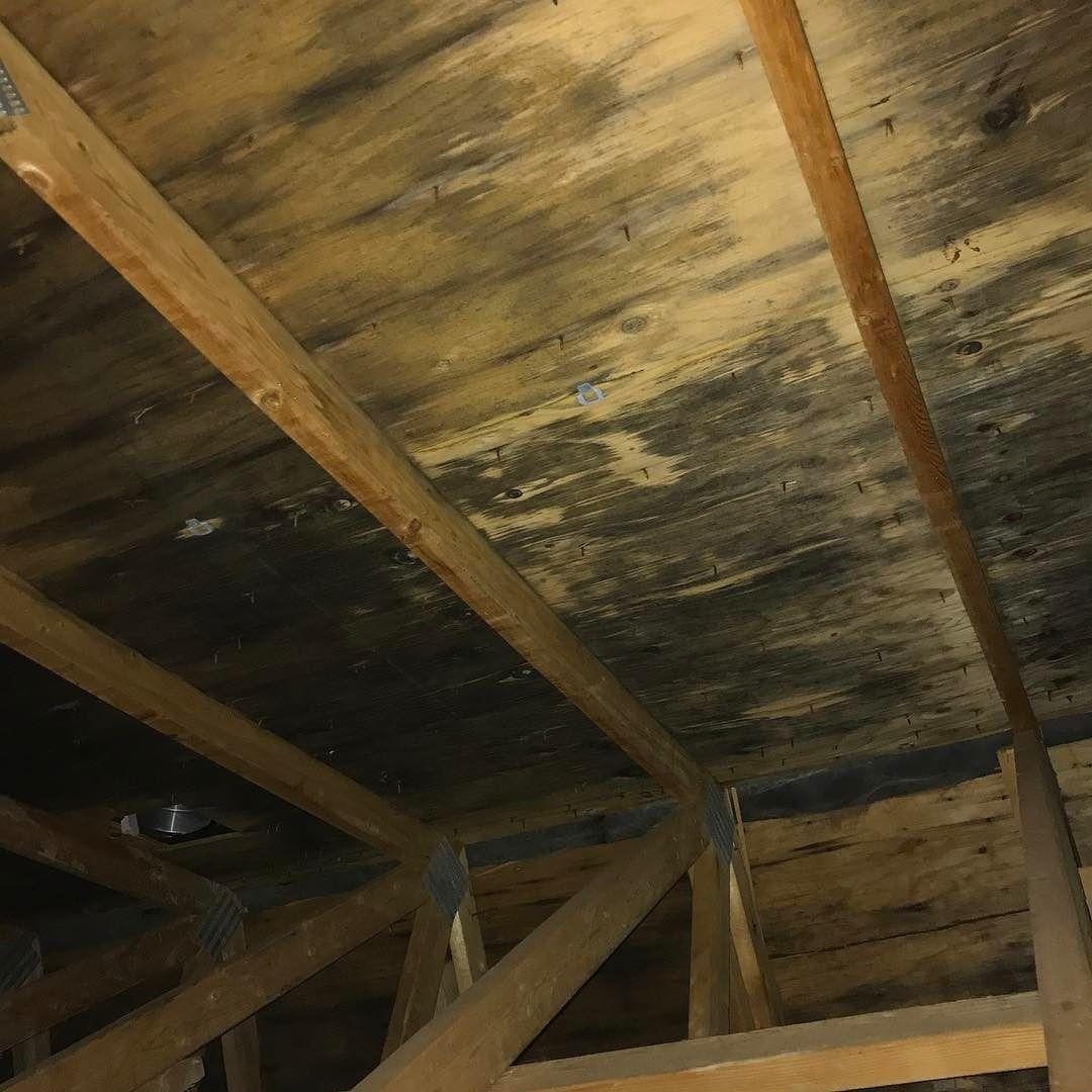 Attic Black Mold Removal Syracuseny Cladosporium Moldtesting Moldremoval Moldabatement Mold Remover Molding Flooring