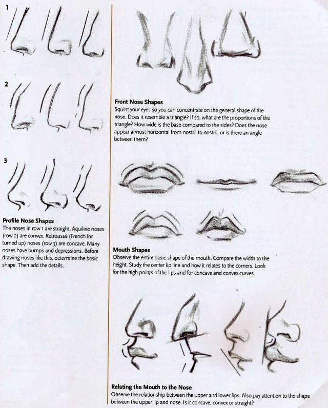 Fantastic Anatomy Of The Lip Gallery - Anatomy Ideas - yunoki.info