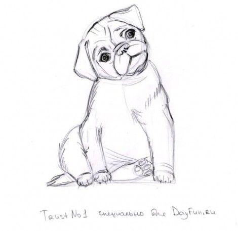 как нарисовать щенка 5