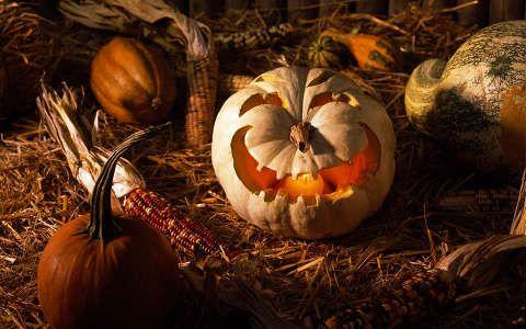 halloween termény tök