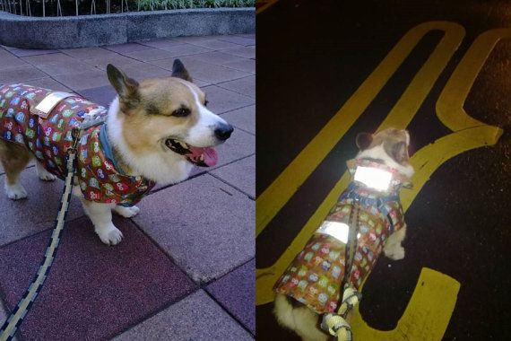 a09b66b83d733 Corgi waterproof coat with detachable light reflective bands Dog rain  jacket raincoat for large Corgi or similar long bodied dog ( LB-ML-CG) on  Etsy