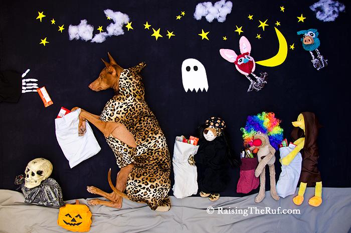 halloween trick or treating dog Rufus