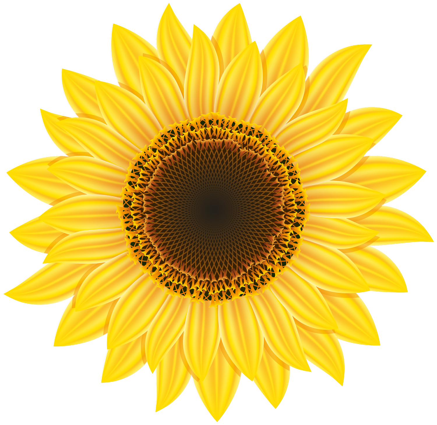 Sunflower PNG Image Sunflower clipart, Sunflower png