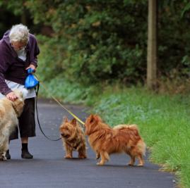 Home Care Assistance Toronto Prevent Senior Hospitalizations Pet Sitting Jobs Senior Dog Dog Walking