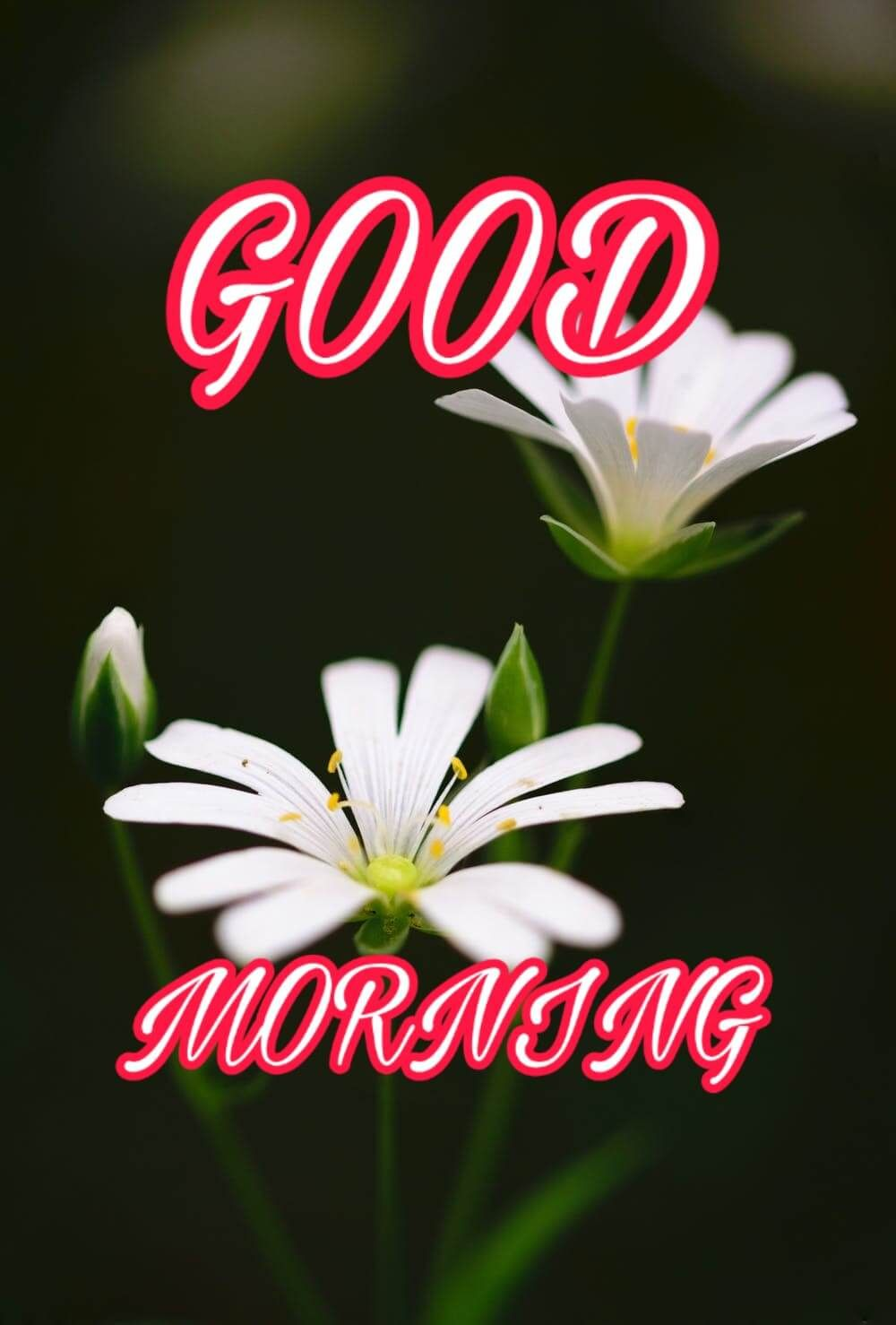 Hello Good Morning Images Download Pestcare Jakarta