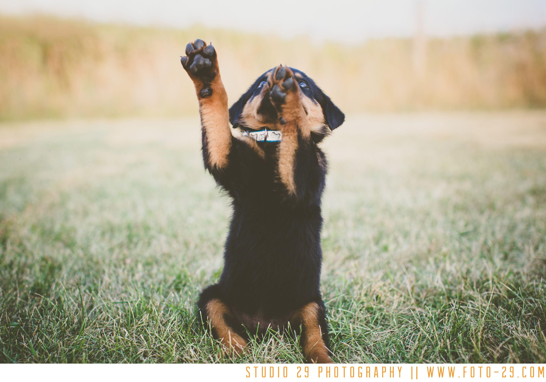 the Puppy // Brookfield Wisconsin Puppies