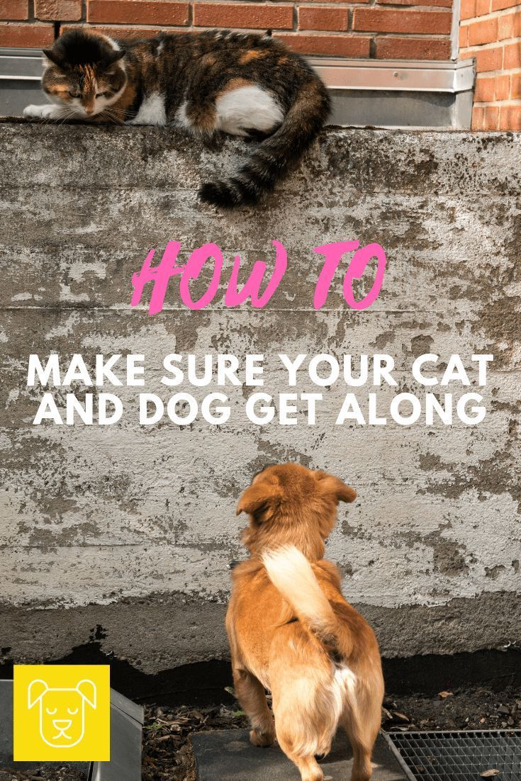 Have you ever had to introduce a dog to a cat? If not done