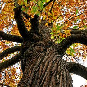 Beautifull tree!