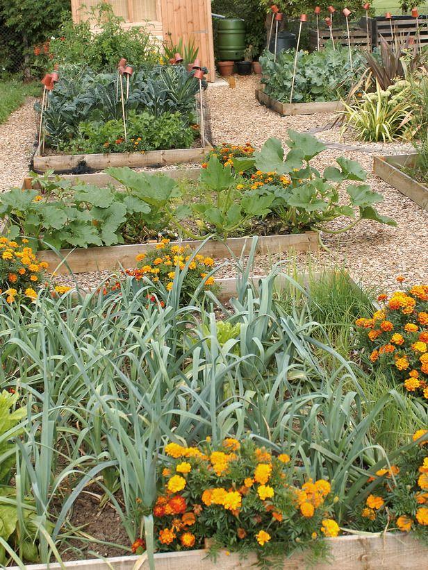 Tips For A Raised Bed Vegetable Garden Planting Vegetables