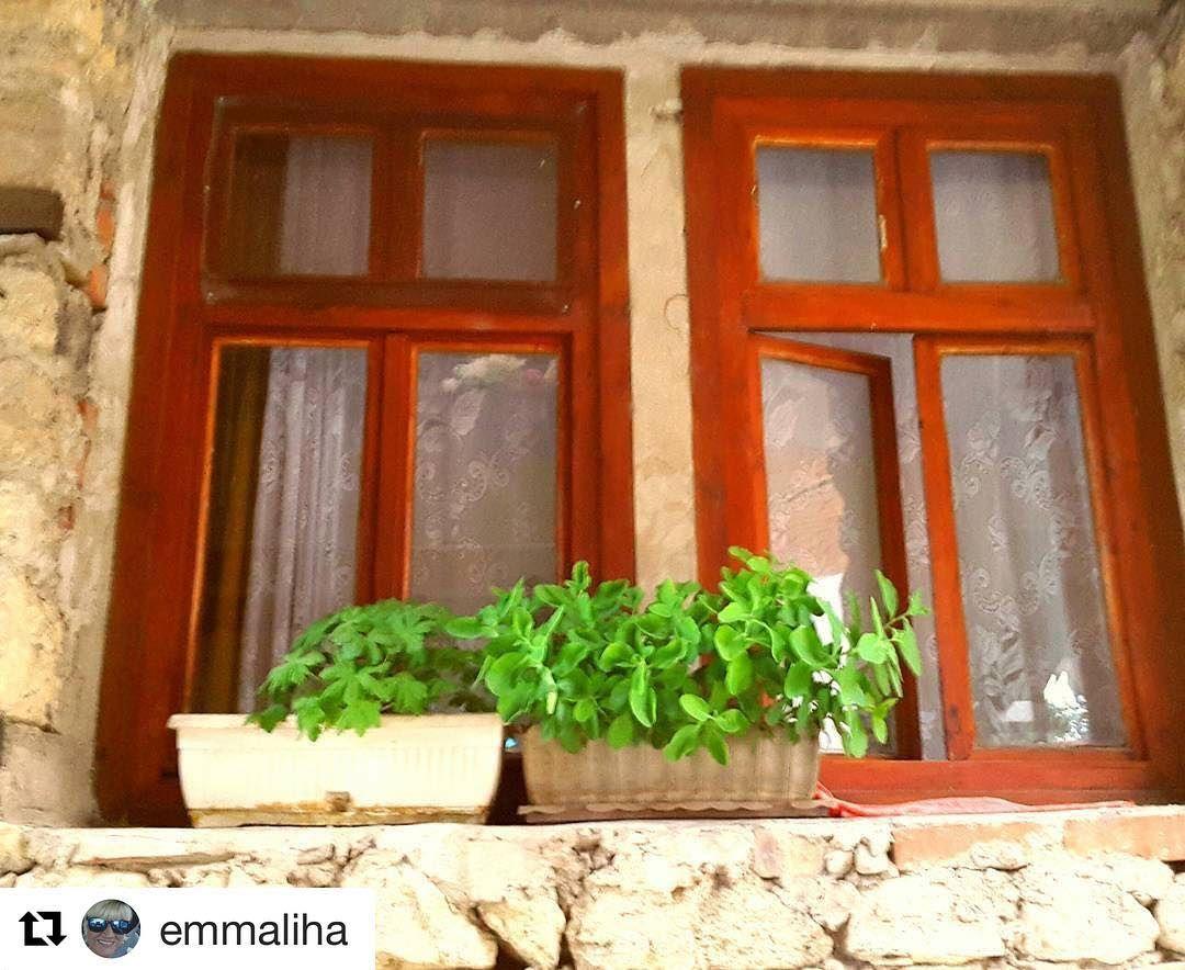 Window display. #reiseliv #reisetips #reiseblogger #reiseråd  #Repost @emmaliha (@get_repost)  #nessebaroldtown #bulgaria #sunnybeach #doorsandwindows #casasecasarios2#dreamchasersworld #diventarefotografodavventura