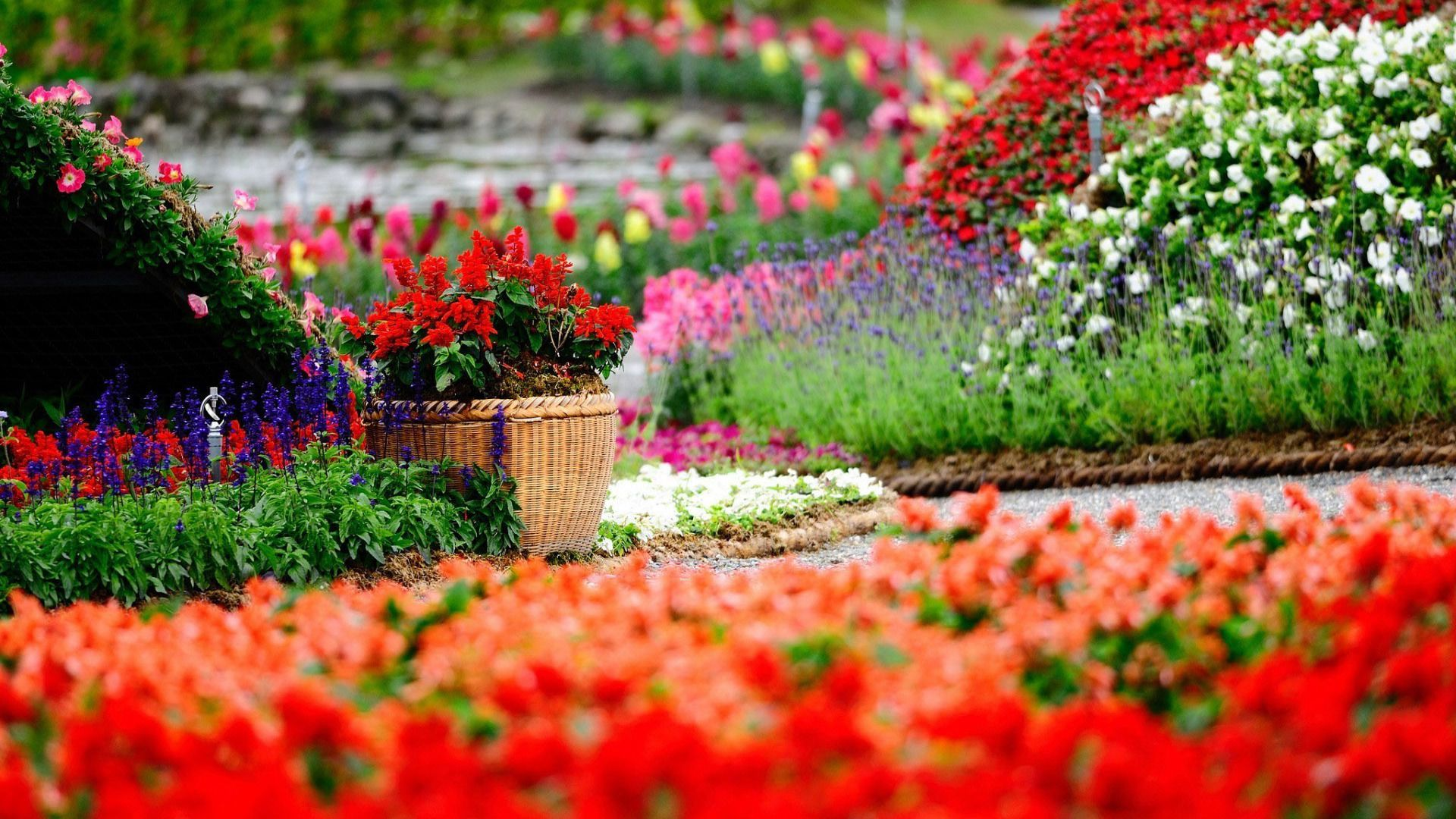 Backgrounds red flowers hd images new with wallpaper roses full backgrounds red flowers hd images new with wallpaper roses full 19201080 flowers hd wallpaper voltagebd Image collections