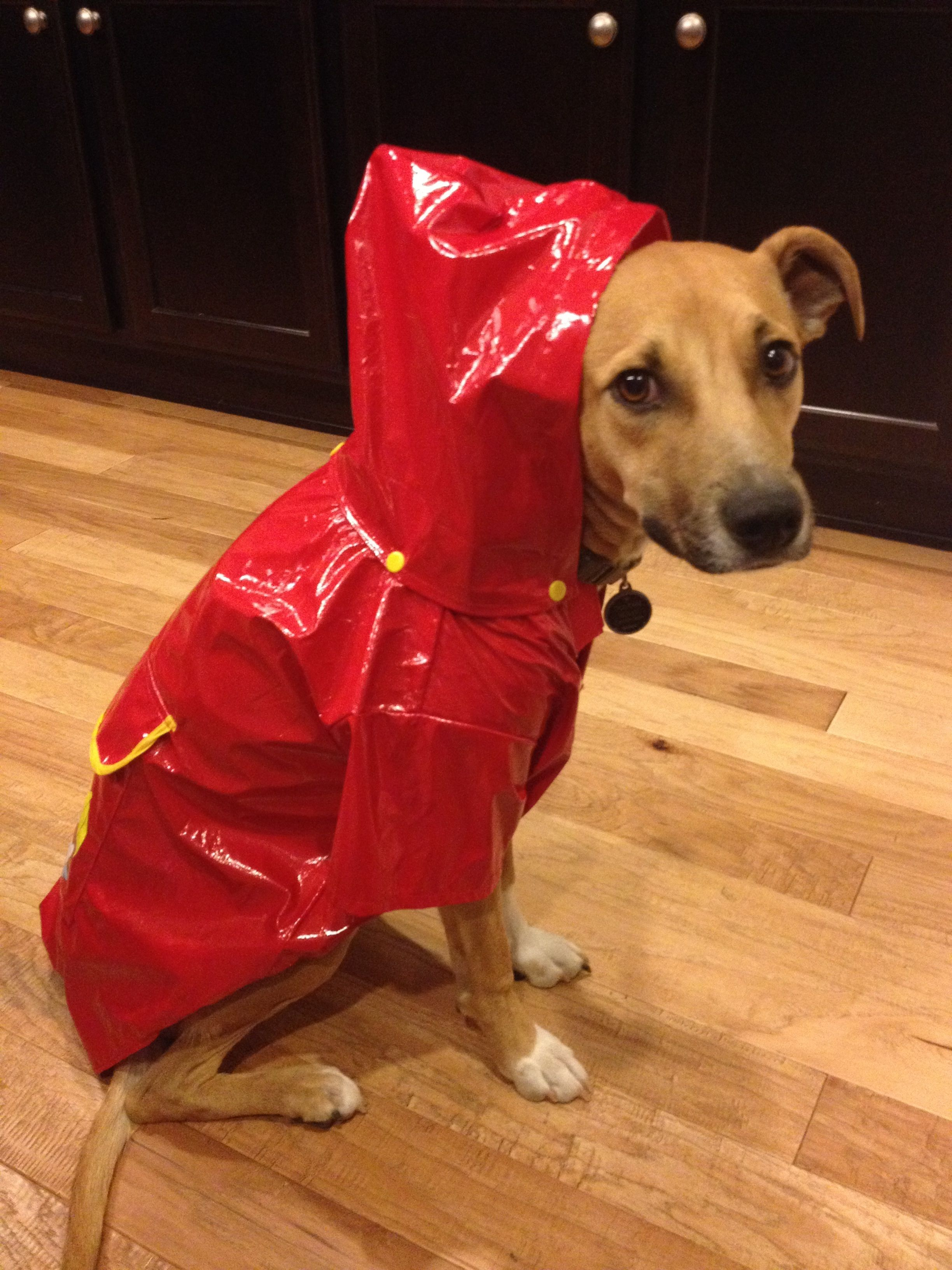 This Is What Happens When Your Dog Refuses To Go Potty In The Rain Your Dog Furry Friend Paper Shopping Bag
