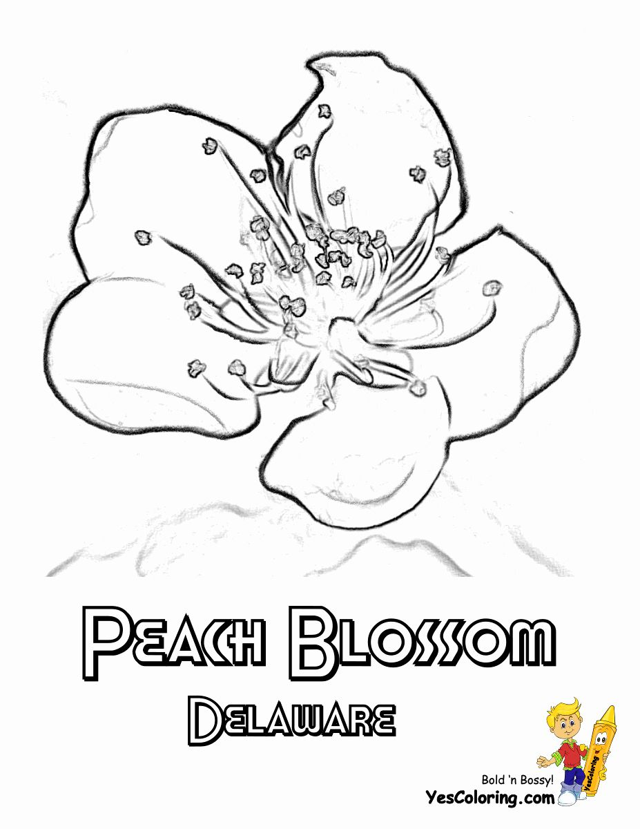 Connecticut State Flag Coloring Page Best Of Delaware State Flower