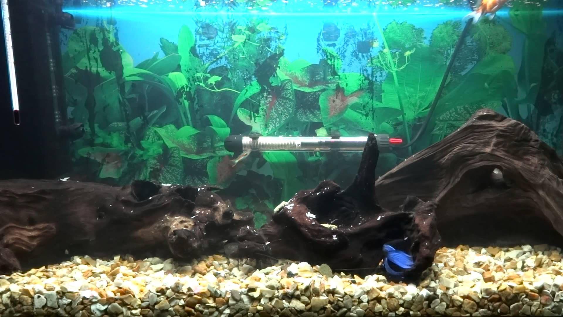 2c0d1a1e6bca26a7a686b73deb3e356d Frais De Aquarium Tropical Schème
