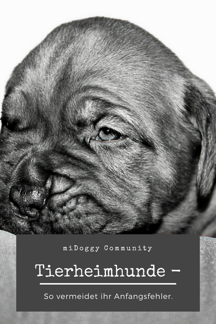 Fehlerhafte Anfangszeiten Mit Einem Tierschutzhund Hunde