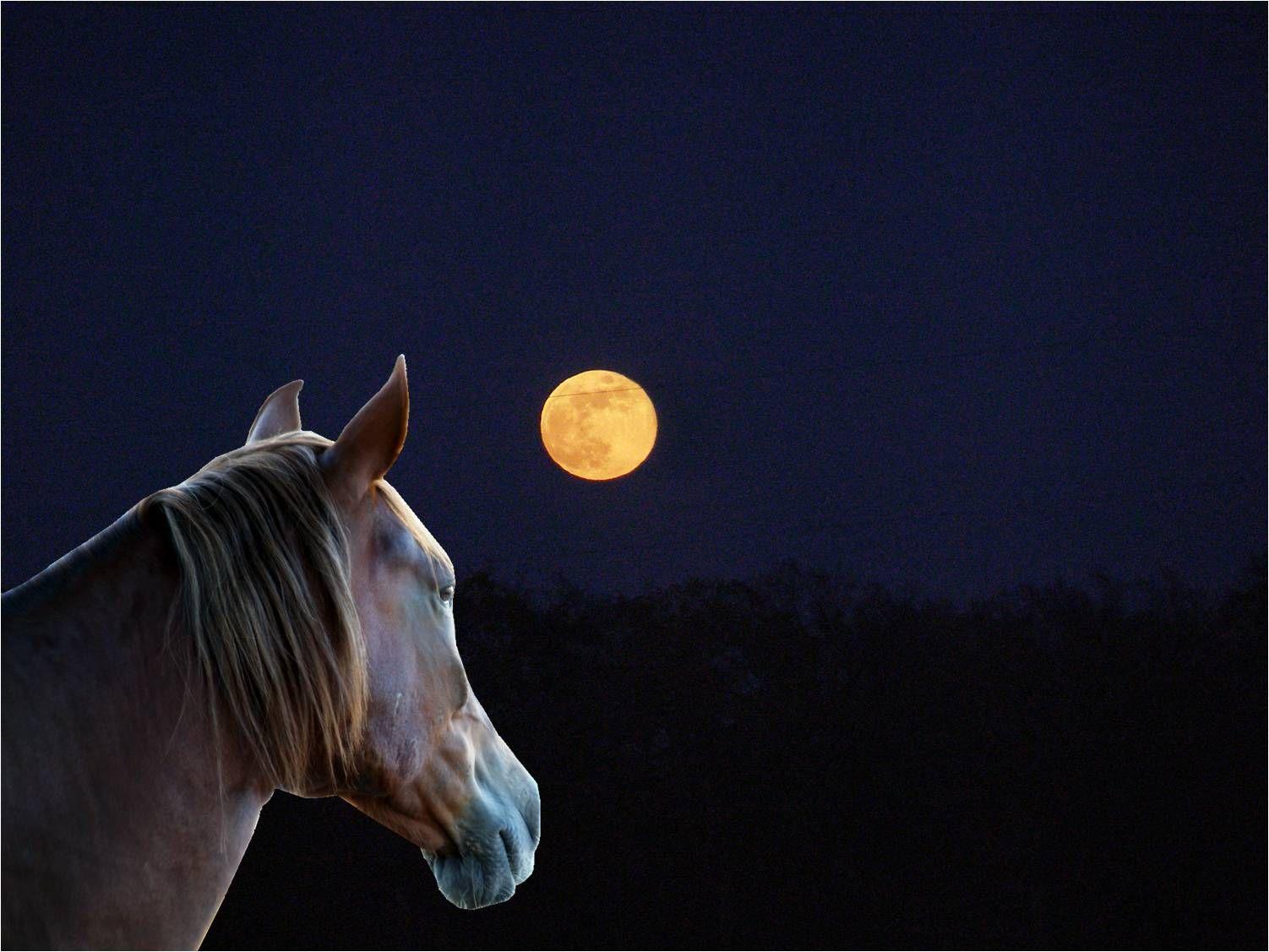 Curioso moon