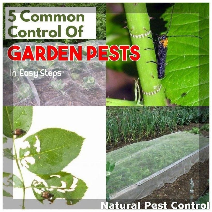 Preventing Garden Pests Naturally Information For Becoming A natural Gardener ** More info could be found at the image url.
