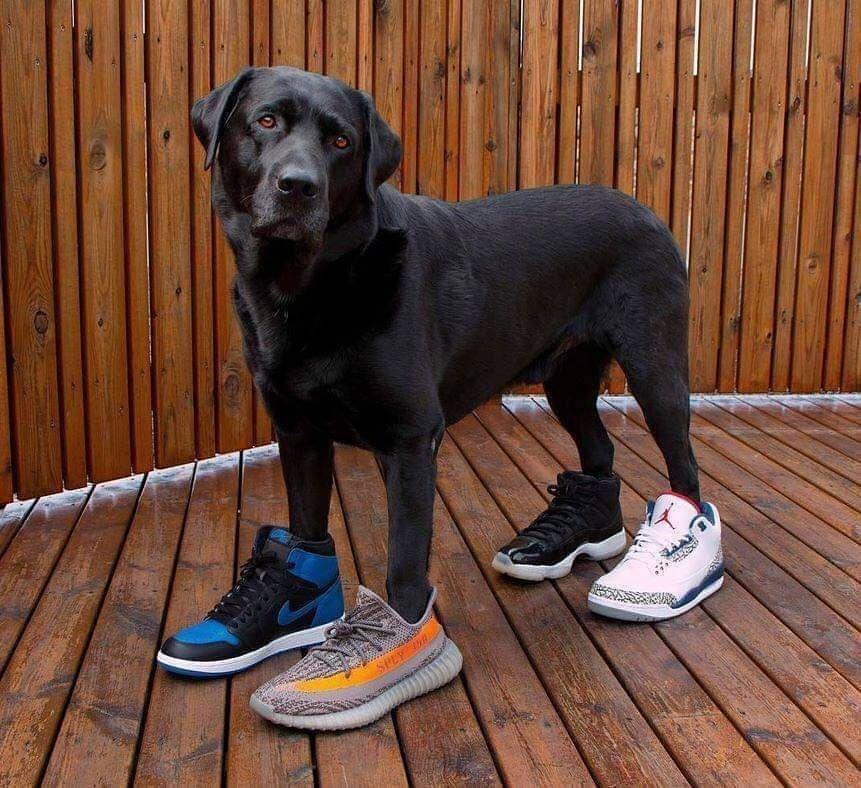 40e11cc1c3a2c1 Watch the Best YouTube Videos Online - Air Bud  randomxv - - - Follow   randomxv for similar post - - -  randomxv  randomxv  randomxv -  dog  dog   puppy  pup ...
