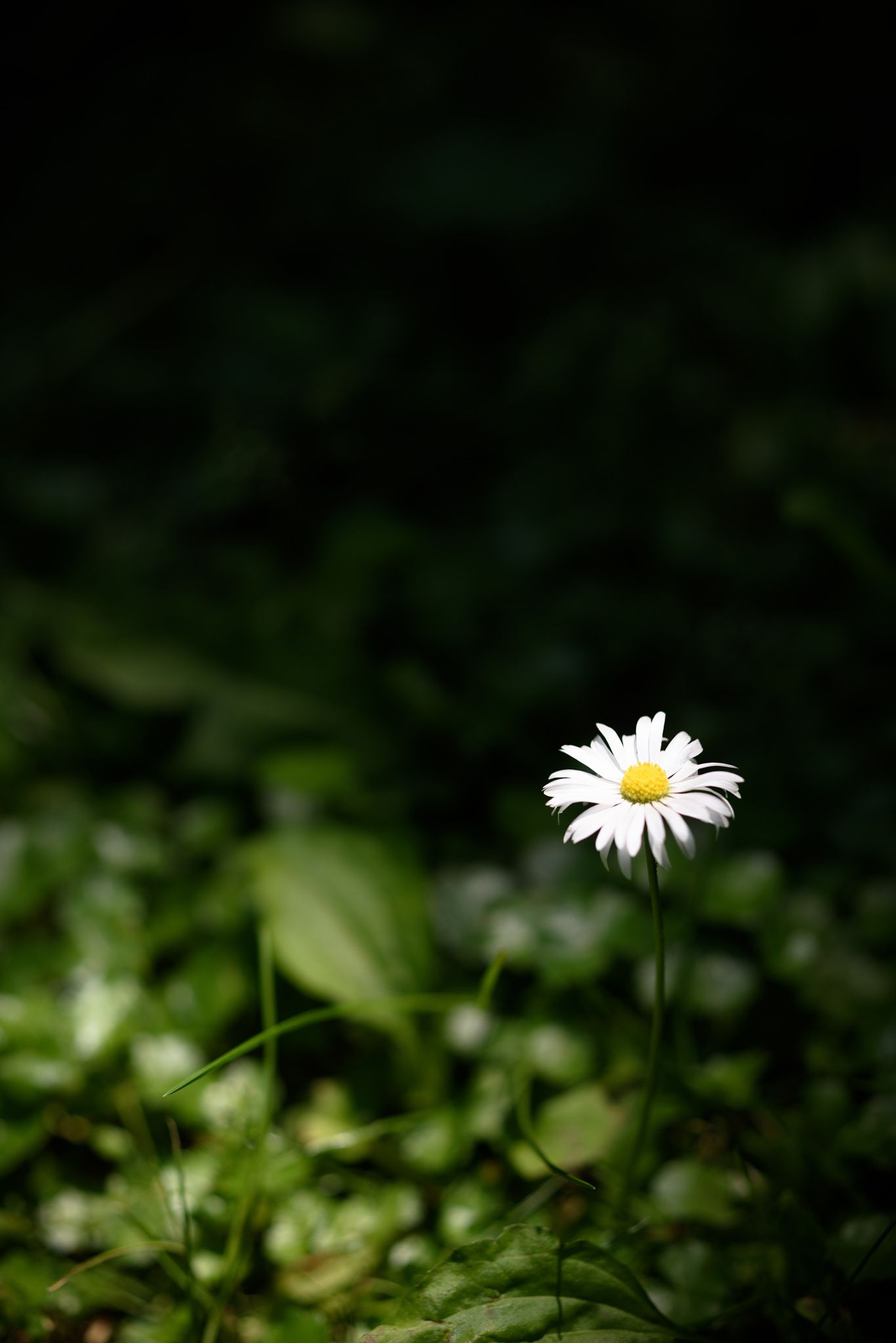Latest List of Lock Screen Iphone White 2020 by 500px.com